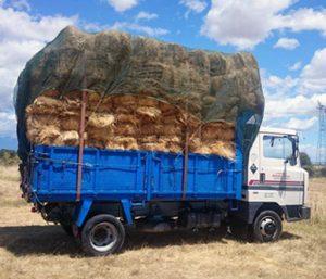 Transporte Arias Alpacas en la Vera