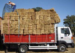Transporte de Alpacas en la vera arias trasnportes