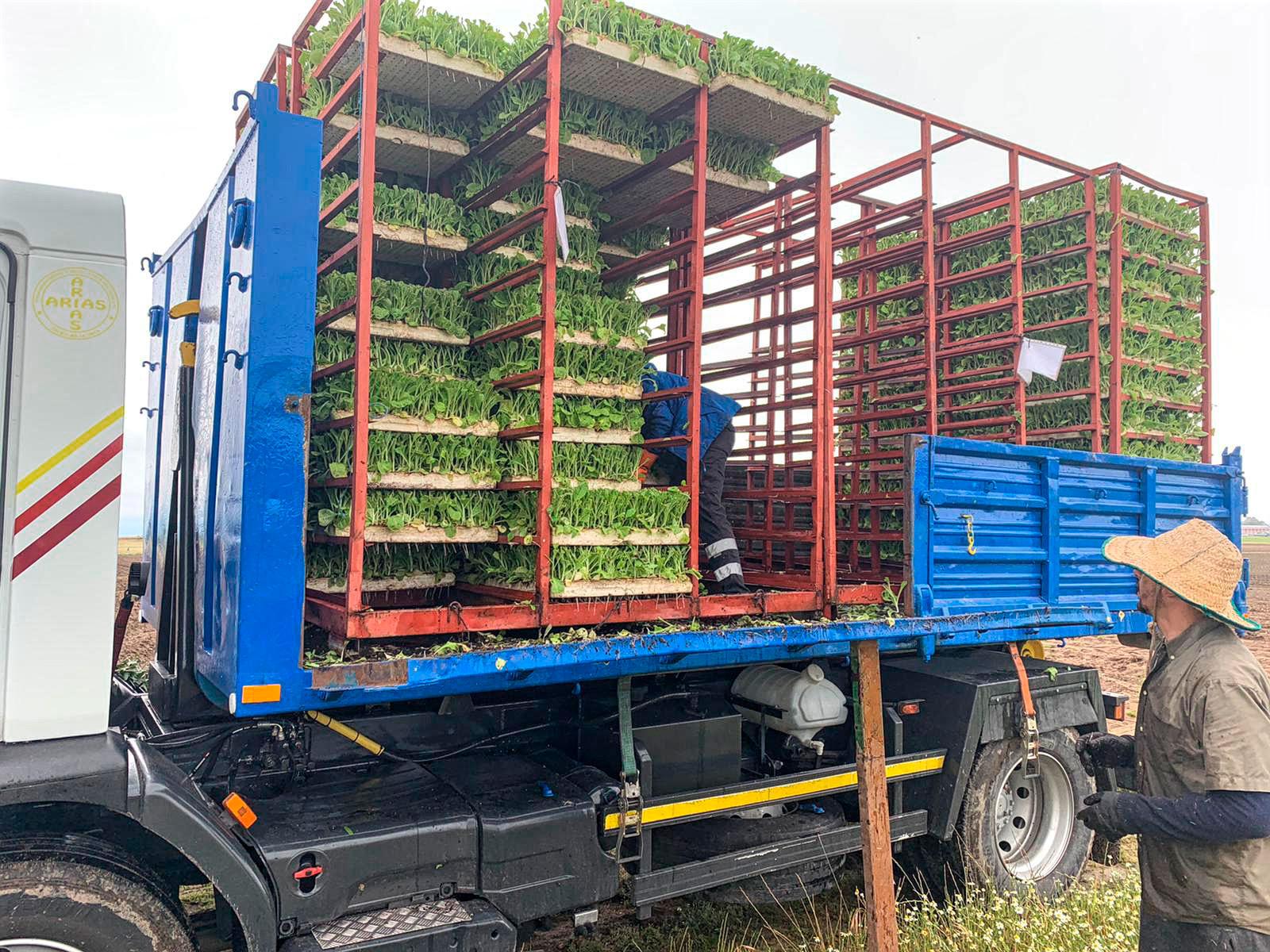 Transporte de Plantas Arias y Sojo